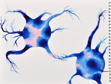 Neurones connecting1